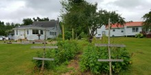 Picture of our raspberry patch.