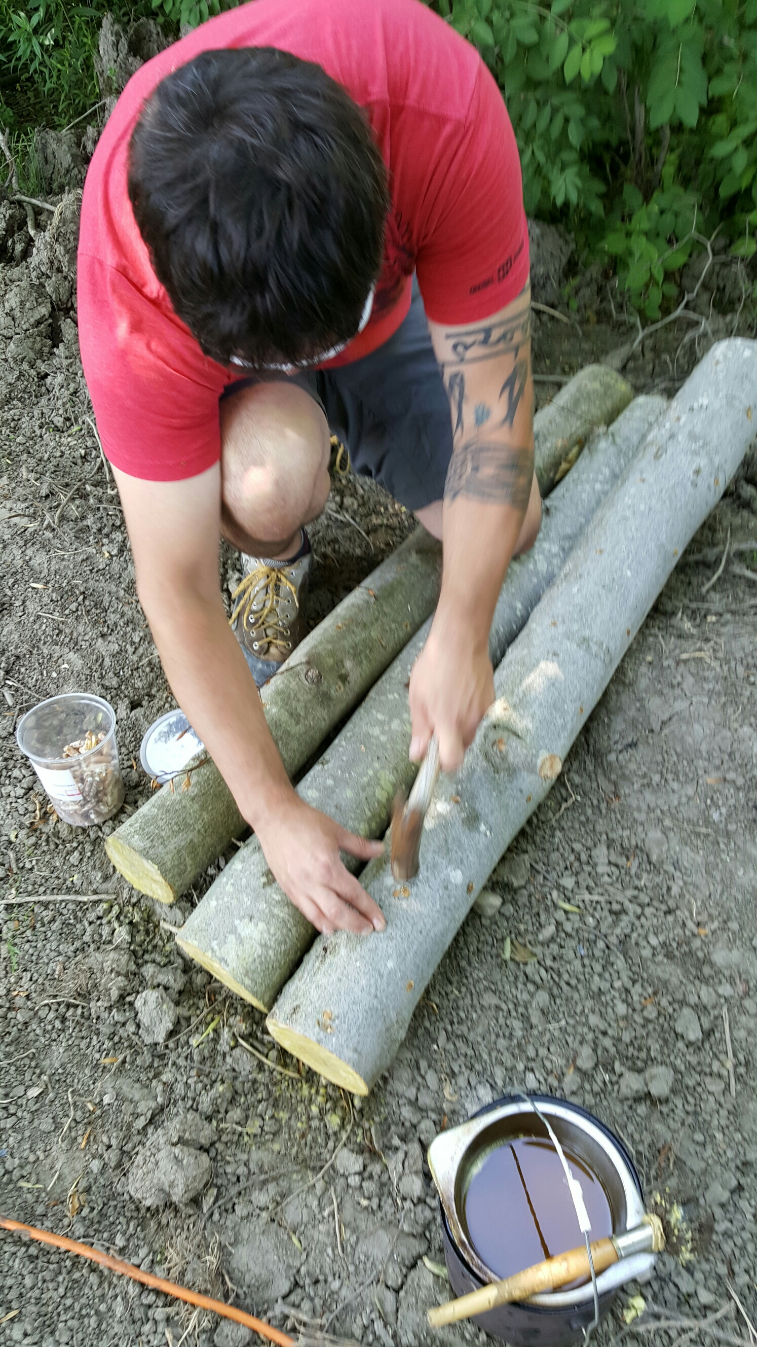 Hammering the spore coated dowel pieces into the log.