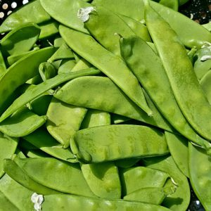 Fresh picked snow peas
